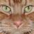 Imatge del perfil de aitor